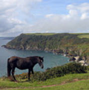 Horse Along Coastal Path Cornwall Art Print