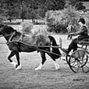 Horse And Cart Art Print