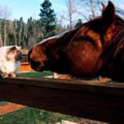 Horse And Cat Nuzzle Art Print