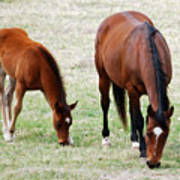 Horse And Colt Art Print