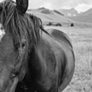 Horse And Sawtooth Mountains Art Print