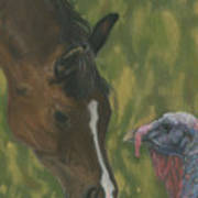 Horse And Turkey Art Print