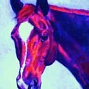 Horse Art Horse Portrait Maduro Psychedelic Art Print