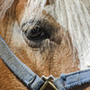 Horse Close Up Art Print