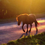 Horse Crossing The Road At Sunset Art Print