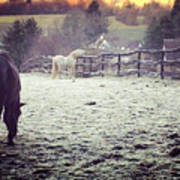 Horses On A Frosty Pasture Art Print