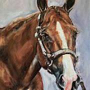 Horse Head Portrait Art Print