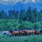 Horse Herd Art Print