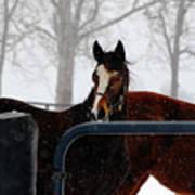Horse In A Snowstorm Art Print