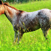 Horse In Pasture Field Art Print by Thomas R Fletcher