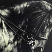 Horse In The Dark II Art Print