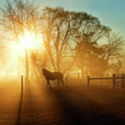 Horse In The Fog At Dawn Art Print