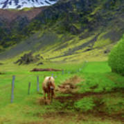 Horse On The South Iceland Coast Art Print