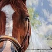 Horse Portrait Closeup Art Print