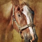 Horse Portrait II Art Print