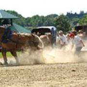 Horse Pull In St Stephen Nb Art Print