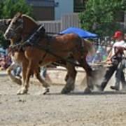 Horse Pull Team A Art Print