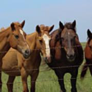 Horse Quartet Art Print