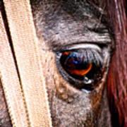 Horse Tears Art Print