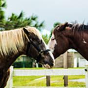 Horse Whisperer Art Print