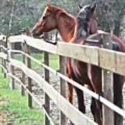 Horse Whisperers Art Print