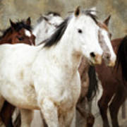 Horses-01 Art Print