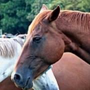 Horses 1 Art Print