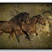 Horses 30 Art Print