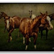 Horses 31 Art Print