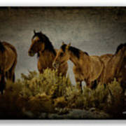 Horses 34 Art Print