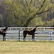 Horses 363 Art Print