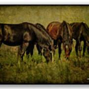 Horses 37 Art Print