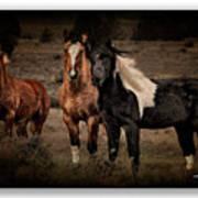 Horses 40 Art Print