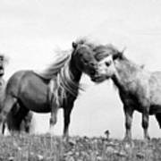 Horses 8 Art Print
