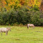 Horses Enjoying A Beautiful Autumn Day Art Print