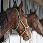 Horses For Sale Art Print