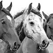 Horses - Id 16217-202749-4749 Art Print