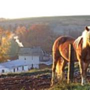 Horses In Autumn Frosty Sunrise Art Print