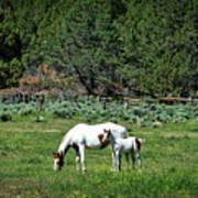 Horses In Meadow - California Art Print