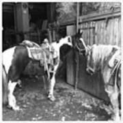Horses In The Barn Art Print