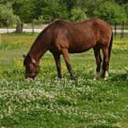 Horses In The Meadow 2 Art Print