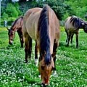 Horses In The Meadow Art Print