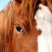 Horse's Mane Art Print