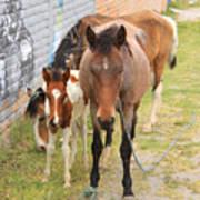 Horses On A Street Art Print