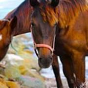 Horses On Jost  Art Print