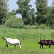 Horses On Pasture Nature Farm Scene Art Print