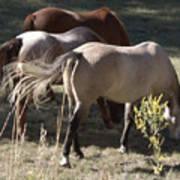 Horses Paradise Valley Art Print