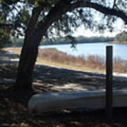 Horseshoe Lake At Orange Springs Florida Art Print