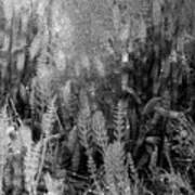 Horsetail Plant Panorama Two  Art Print