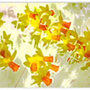 A Host Of Golden Daffodils Art Print